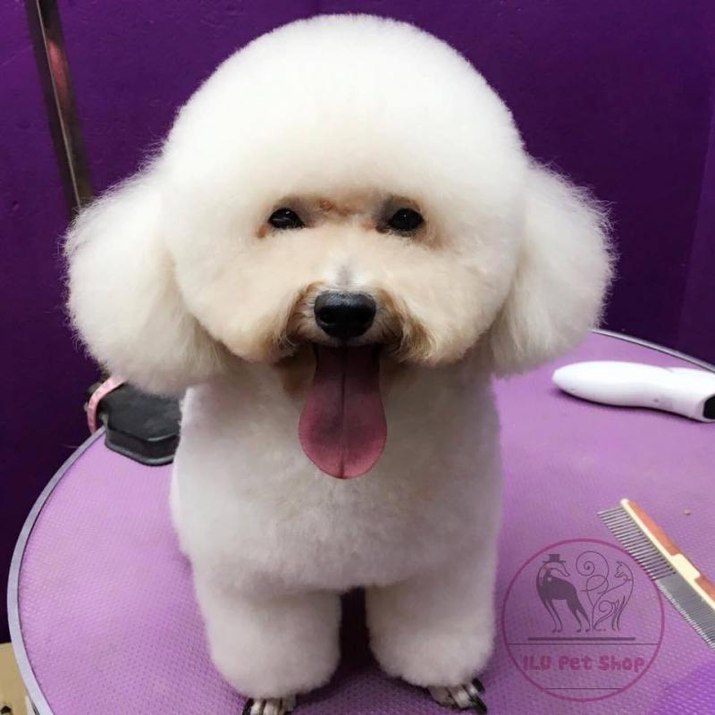 ILU Pet Shop