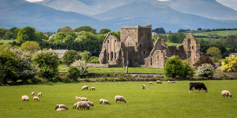 Những đồng cỏ xanh mướt ở Ireland