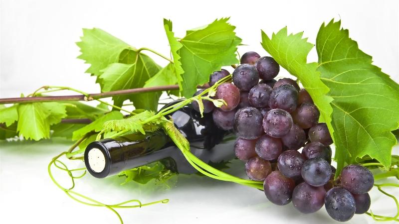 Chất lượng rượu vang Argentina được đánh giá khá cao