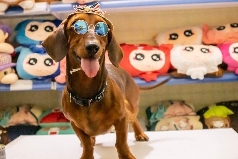 Top 6 Shop bán phụ kiện thú cưng tốt nhất Quận Tây Hồ, Hà Nội