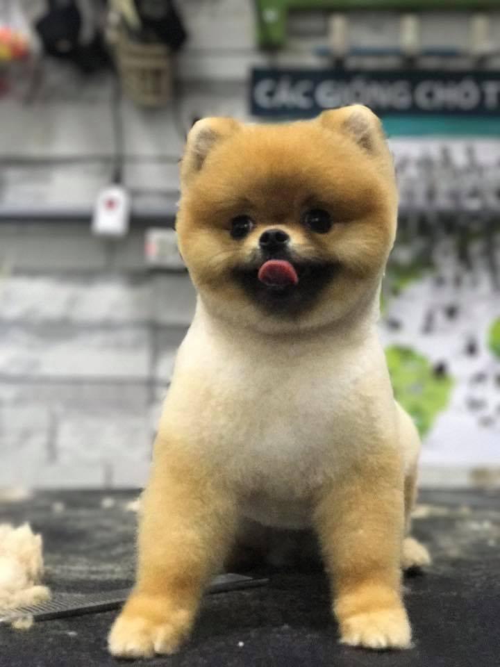 J & Pet Shop Spa