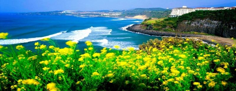 Bờ biển trong xanh tại đảo Jeju Hàn Quốc