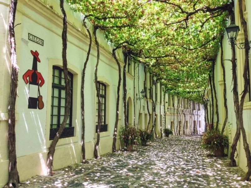 Hai bên đường được trồng toàn những cây nho xanh lá che phủ tạo nên một cảm giác mát mẻ và thanh bình