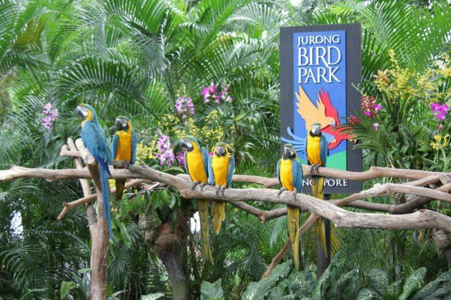 Vườn chim Jurong có hầu hết tất cả các loại chim