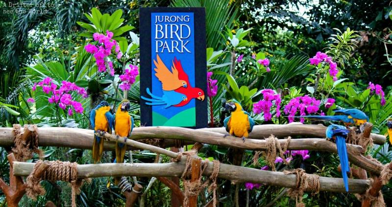 Vườn chim Jurong là khu bảo tồn các loài chim lớn nhất khu vực Đông Nam Á