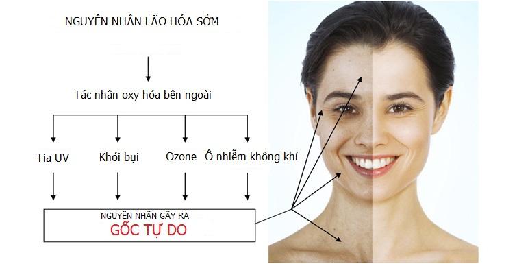 Kem chống lão hóa Sakura Anti – Aging Whitening Cream chống lại lão hóa.