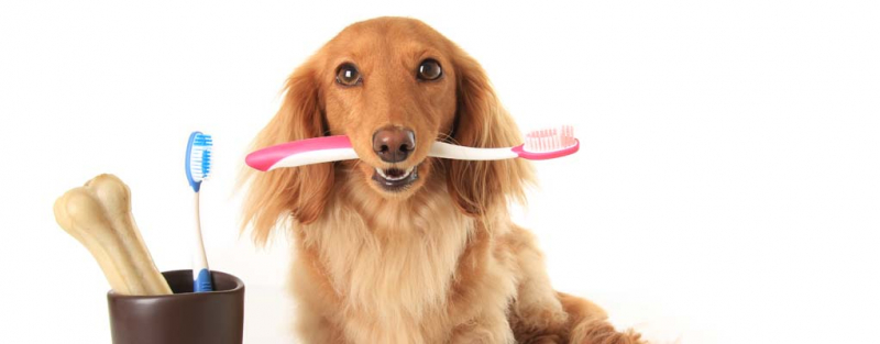 Kem Đánh Răng PPP Dental Gel có thể dùng để đánh răng hoặc cho thú cưng trực tiếp liếm để tự làm sạch khoang miệng mà lại cực kì an toàn, không gây độc hại cũng như không cần súc miệng sau khi sử dụng.