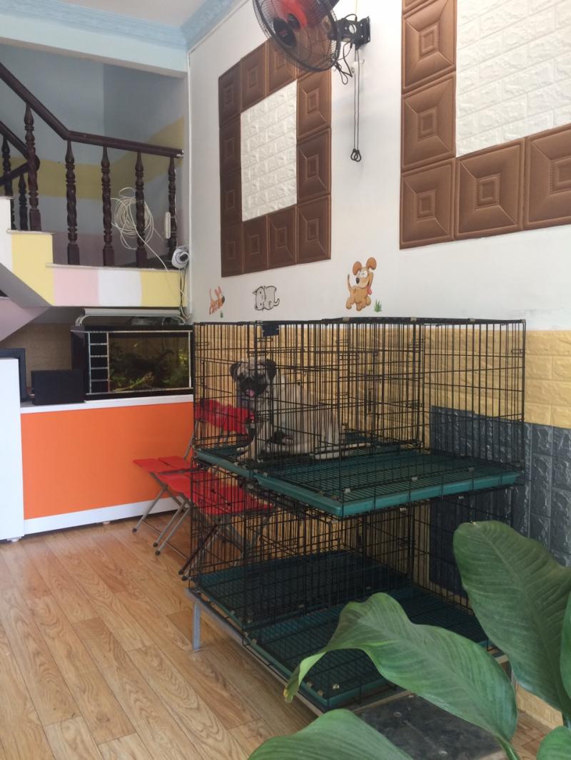 Thú cưng được chăm sóc tại Khách sạn chó mèo Phương Nam
