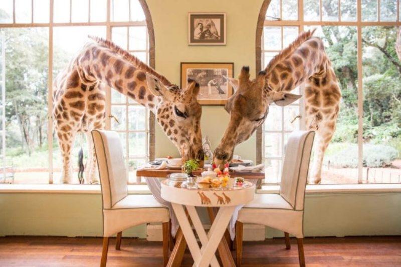 Khách sạn Giraffe Manor - Kenya