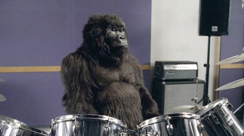 Đúng vậy! Một con khỉ đột đang chơi trống