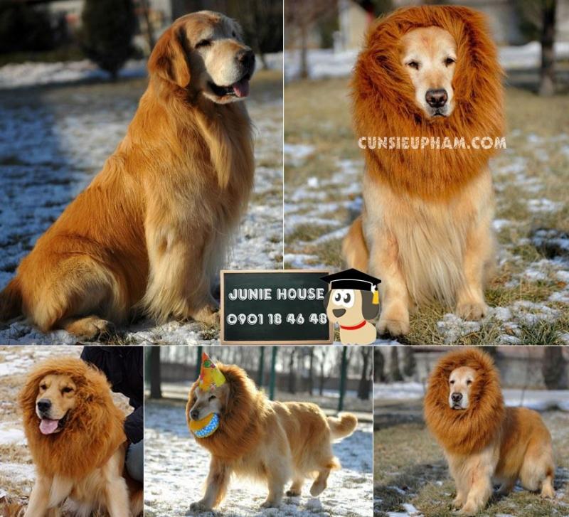 Khi thú cưng biến hình thành những động vật khác.