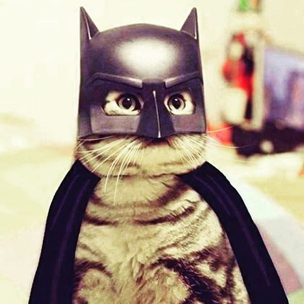 Khi thú cưng làm siêu anh hùng