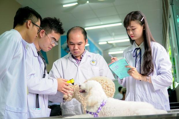 Sinh viên Khoa Thú y trong giờ thực hành