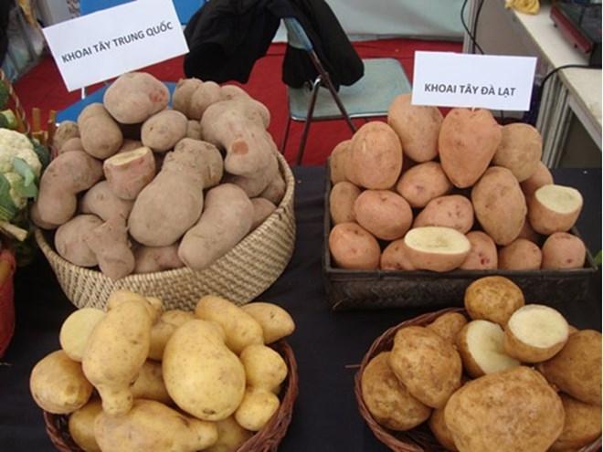 Phân biệt giữa khoai tây Trung Quốc và khoai tây Đà Lạt
