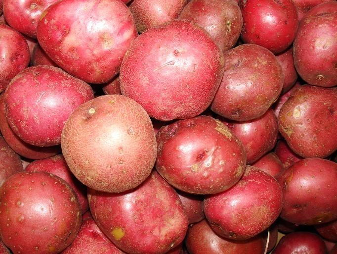 Khoai tây màu đỏ còn mang đến cho bạn làn da hồng hào vì nó chứa nhiều dưỡng chất nguồn gốc thực vật