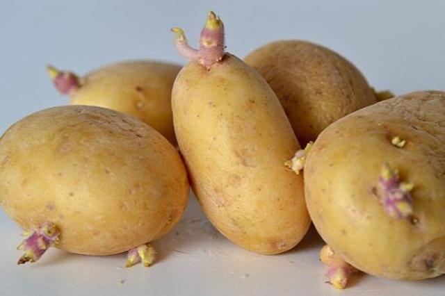Khoai tây mọc mầm có hại với sức khỏe