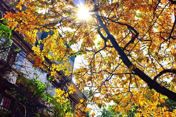 Top 9 điều thú vị nhất khi mùa thu đến ở Việt Nam