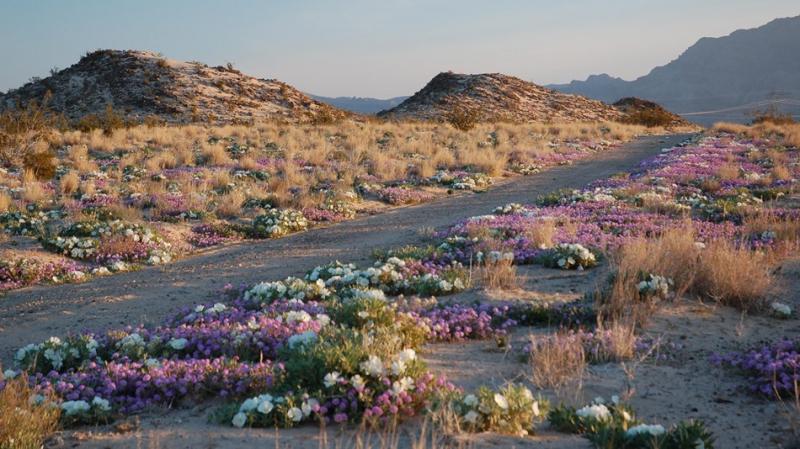 Khu bảo tồn quốc gia Mojave, California, Mỹ