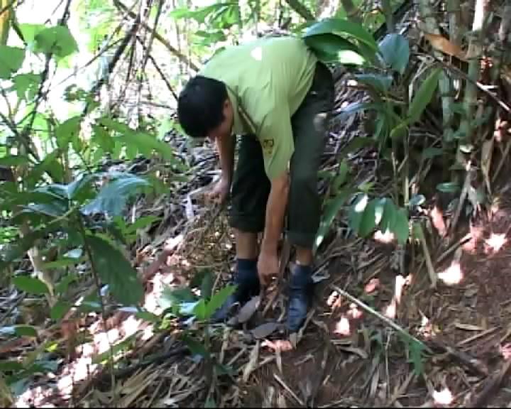 Cán bộ kiểm lâm Khu bảo tồn thiên nhiên Mường Nhé thả các cá thể rùa về môi trường tự nhiên