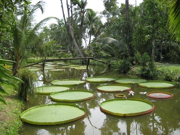 Khu du lịch Nhà vườn Thảo Nguyên