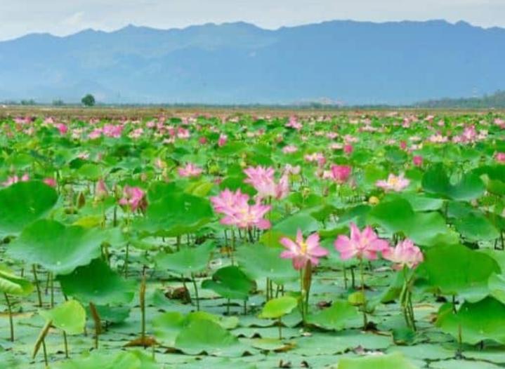 Khu du lịch sinh thái Đồng Sen Tháp Mười