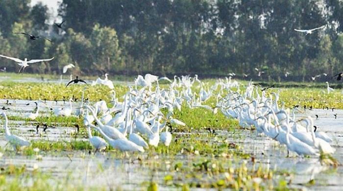 Khu bảo tồn thiên nhiên hoang dã Đồng Tháp Mười