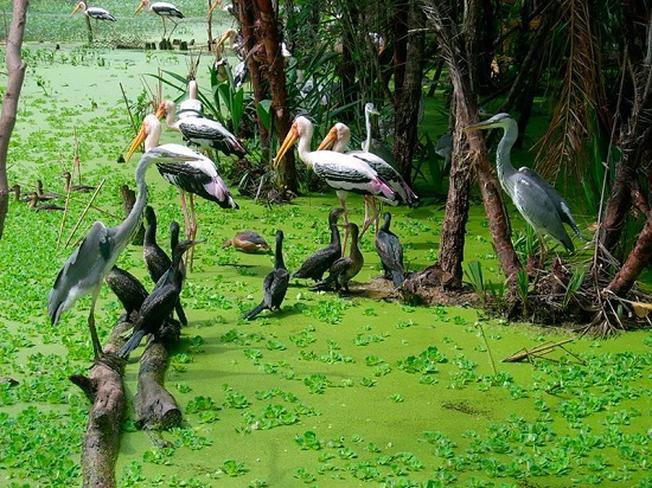 Khu du lịch sinh thái Gáo Giồng