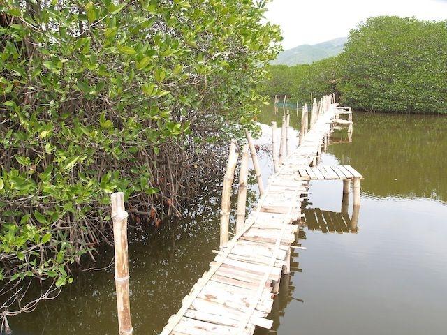 Khu du lịch sinh thái Rừng Đước là một kiểu điển hình của vùng sinh thái nước mặn