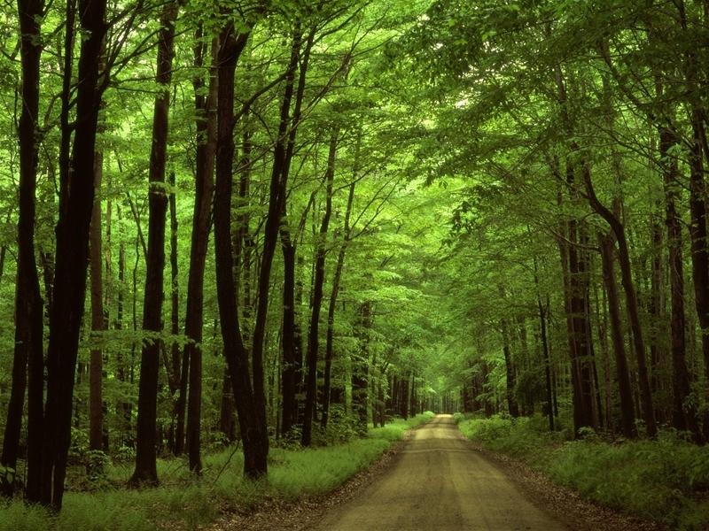Khu du lịch sinh thái rừng Nam Cát Tiên