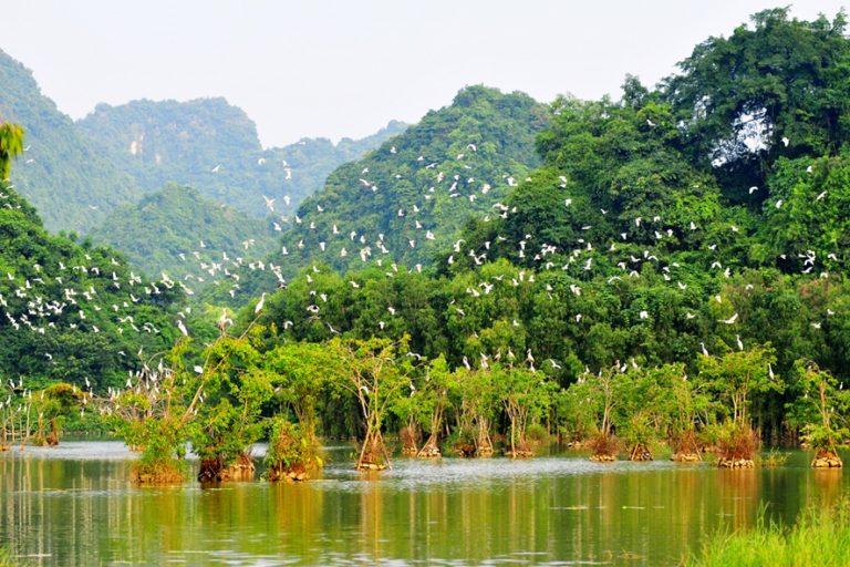 Khu du lịch sinh thái vườn chim thung Nham