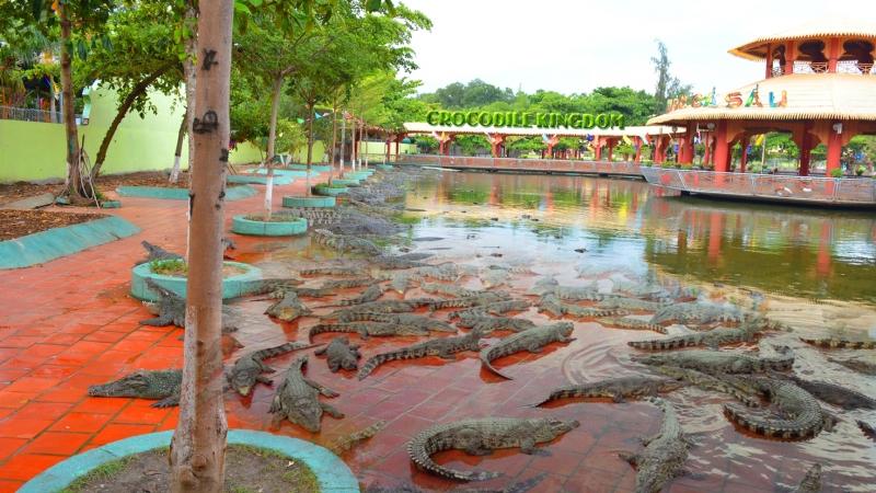 Bạn có thể tận mắt chiêm ngưỡng những chú cá sấu thực sự