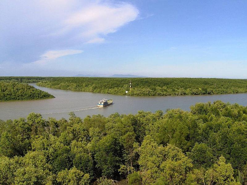 Hợp lưu của sông Lò Rèn và sông Vàm Sát trong khu dự trữ sinh quyển Cần Giờ