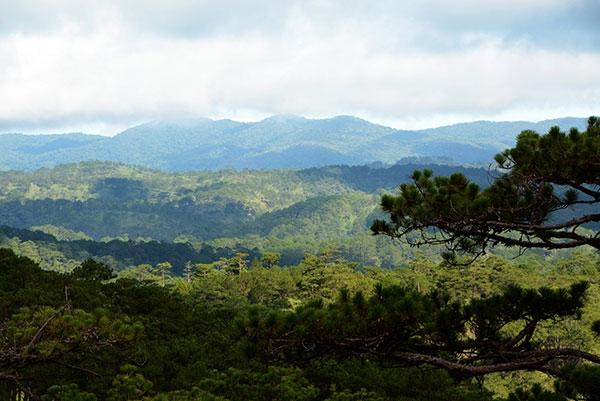 Những cánh rừng nguyên sinh tại khu dự trữ sinh quyển LangBiang