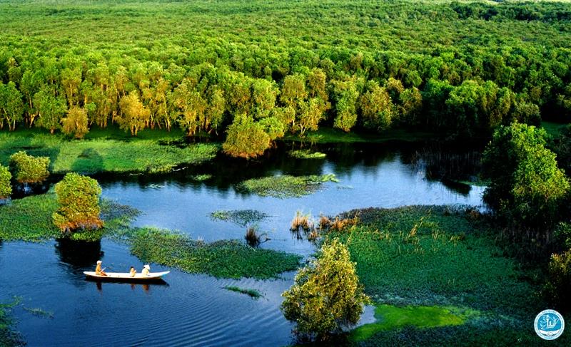 Khu rừng tràm Vị Thủy