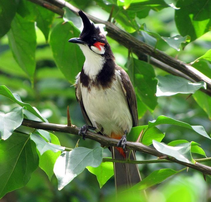 Khu vườn bắt đầu nhộn nhịp bởi tiếng chim líu lo khởi đầu ngày mới.