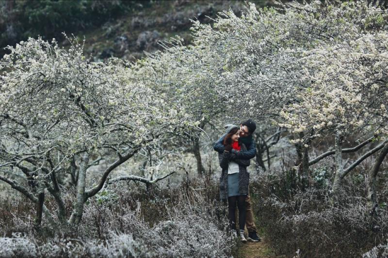 Ảnh cưới tại khu vườn hoa mận trắng sẽ là những khoảnh khoắc đáng nhớ
