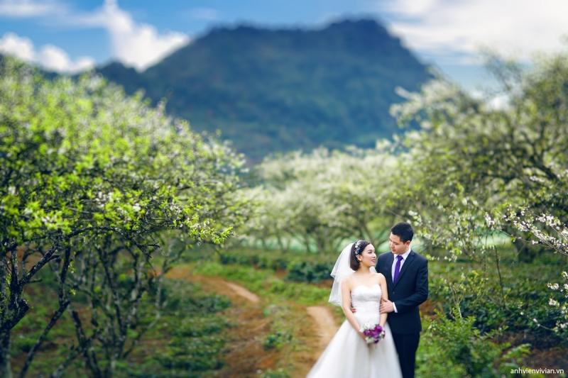 Cô dâu, chú rể lung linh bên khu vườn hoa mận trắng