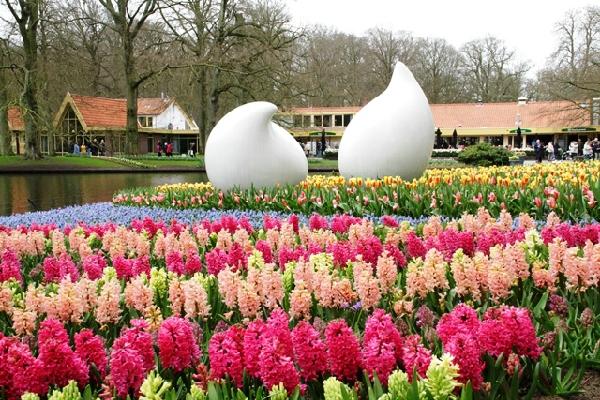 Vườn hoa là thiên đường của muôn hoa đua sắc với vô số loài hoa tulip