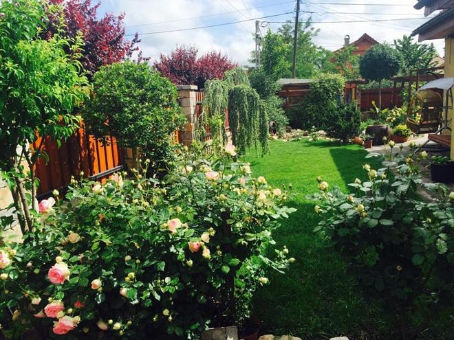 Khu vườn nhà em thật là đẹp, tuy không rộng lắm nhưng được trồng đủ các loại cây.