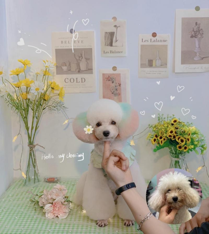 Kimi Pet là địa chỉ tắm cho chó mèo uy tín tại Hà Nội