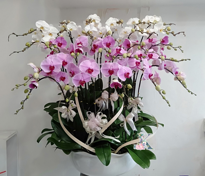 King Flowers