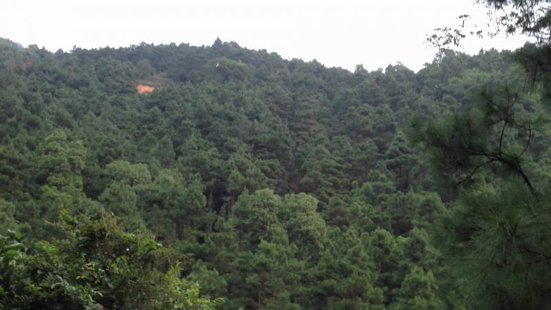 Rừng thông xanh nơi quần thể khu di tích Côn Sơn