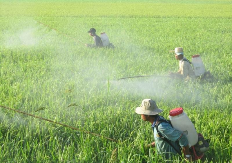 Lạm dụng thuốc trừ sâu trong nông nghiệp