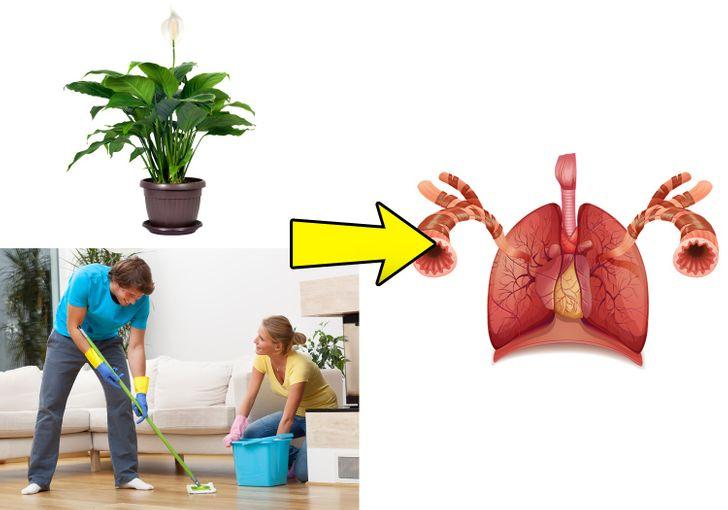 Làm sạch không khí khỏi độc tố
