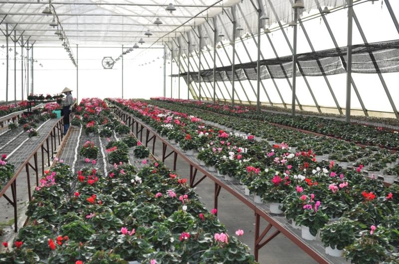 Làm việc ở các nông trại hoa