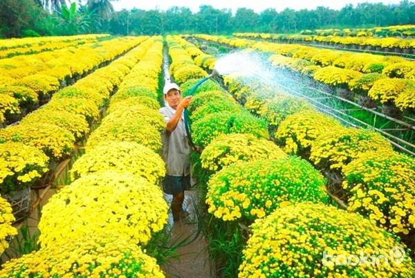 Làng hoa kiểng thành phố hoa Sa Đéc