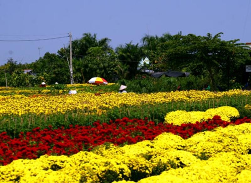 Hoa Mê Linh từ lâu đã trở thành một thương hiệu khá nổi tiếng trên thị trường hoa trong cả nước.