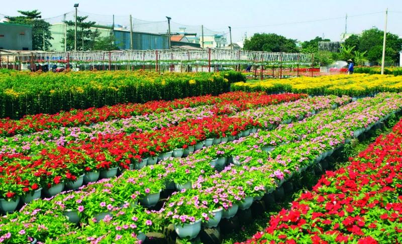 Những luống hoa đỏ rực