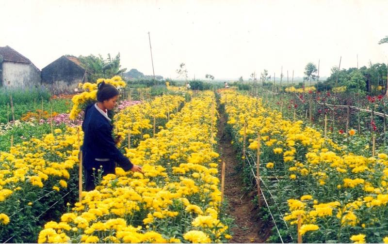 làng hoa Ngọc Hà
