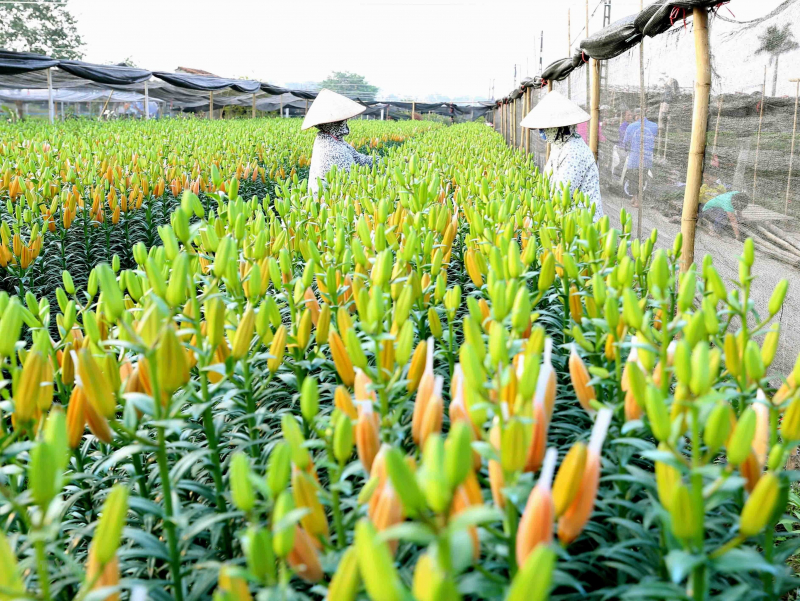 Làng hoa Tây Tựu, Hà Nội
